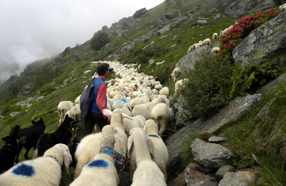 bc2012#02 | La montagna del pastore