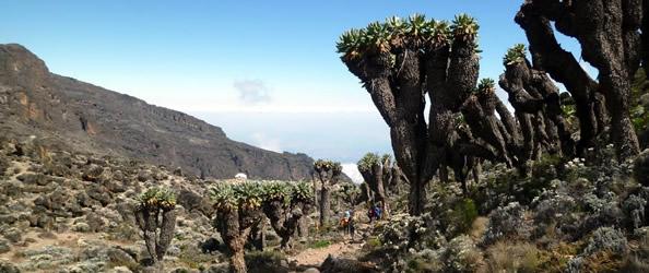 Kilimanjaro, trekking sul tetto d'Africa