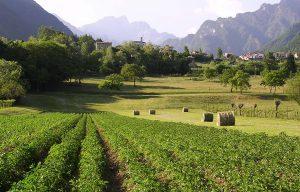 Contadini di montagna: l'agricoltura che rinasce