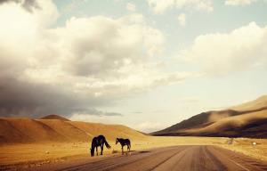 Dalle Dolomiti alla Mongolia, in utilitaria