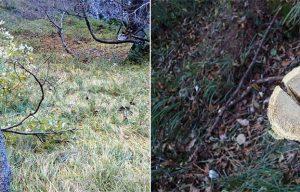 Percorsi selvaggi nella Valle del Mis, vistosamente segnalati