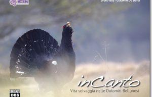 InCanto. Vita selvaggia nelle Dolomiti Bellunesi